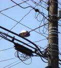 Utility_pole_in_Curitiba